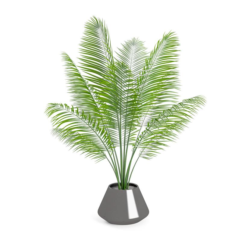 Decorative Palm tree planted gray ceramic pot. Isolated on white background. 3D Rendering, Illustration stock illustration
