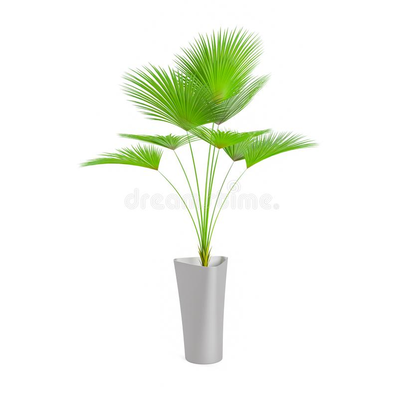 Decorative Palm tree planted grey ceramic pot. Isolated on white background. 3D Rendering, Illustration vector illustration