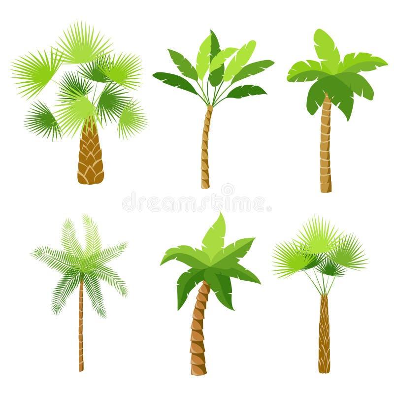 Decorative palm trees icons set. Isolated vector illustration vector illustration