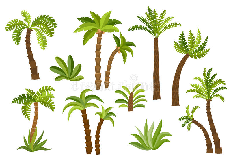 Decorative palm trees set. vector illustration