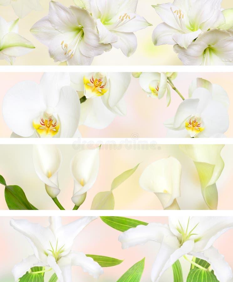 Decorative Pastel color flower banner. Pastel color lilies , orchids, ayrum boquet for banners stock photo