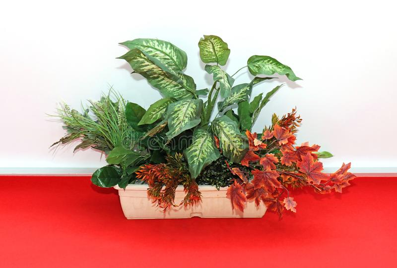 Decorative plant on red floor stock photo