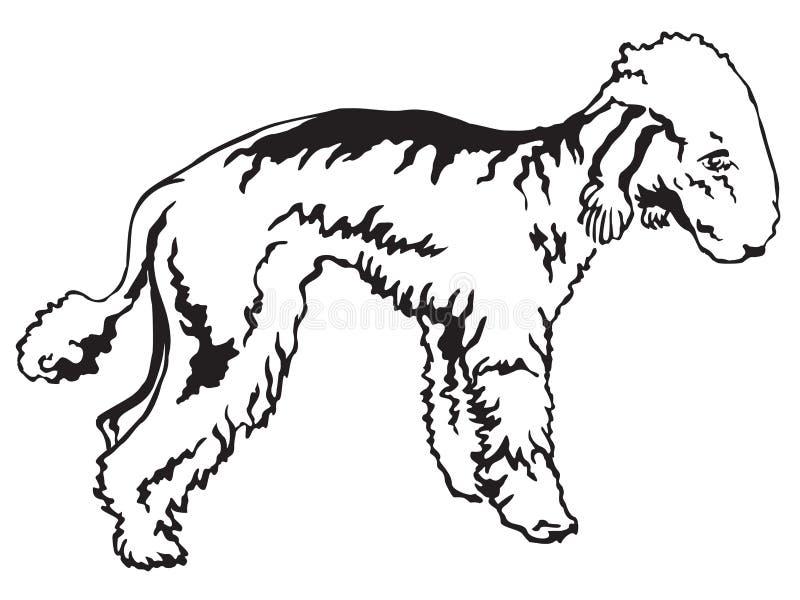 Decorative standing portrait of Bedlington Terrier vector illustration vector illustration