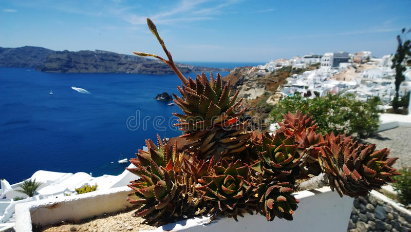 Decorative pot with cactus in Oia in Santorini. Stunning views of the bright sea in the background royalty free stock photos
