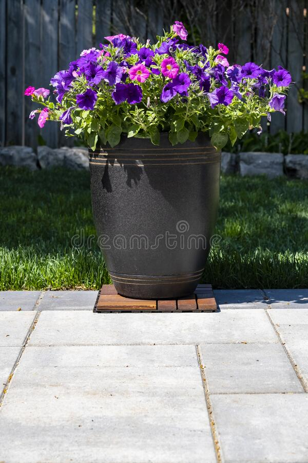A Decorative Pot of Pink and Purple Petunias royalty free stock images