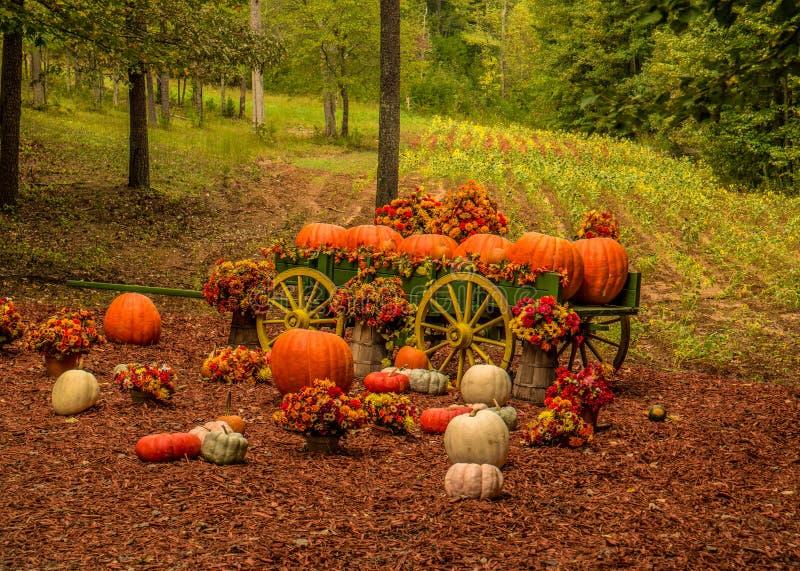 Decorative pumpkin farm display in autumn stock photos