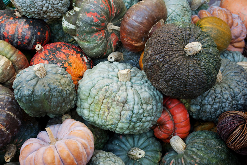 Decorative Pumpkins Stock Photography