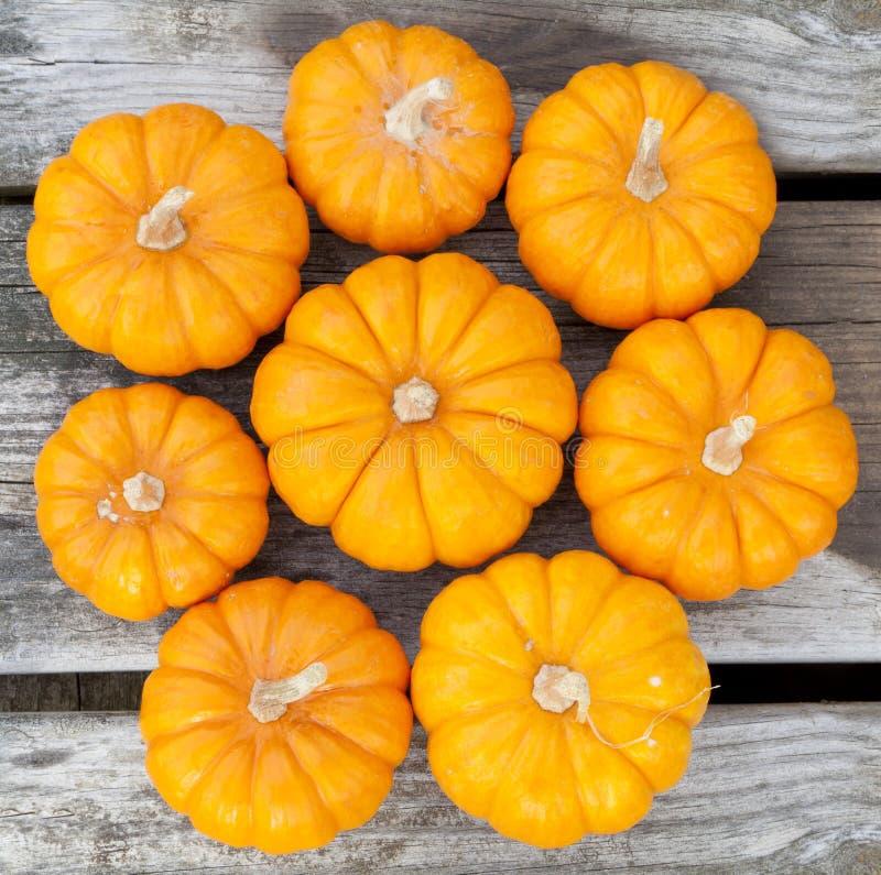 Download Decorative pumpkins stock image. Image of squash, ornamental - 25706633