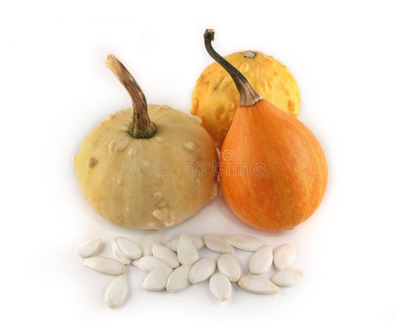 Decorative pumpkins isolated