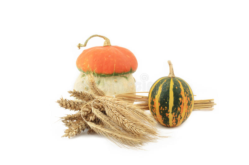 Decorative pumpkins and wheat stock images
