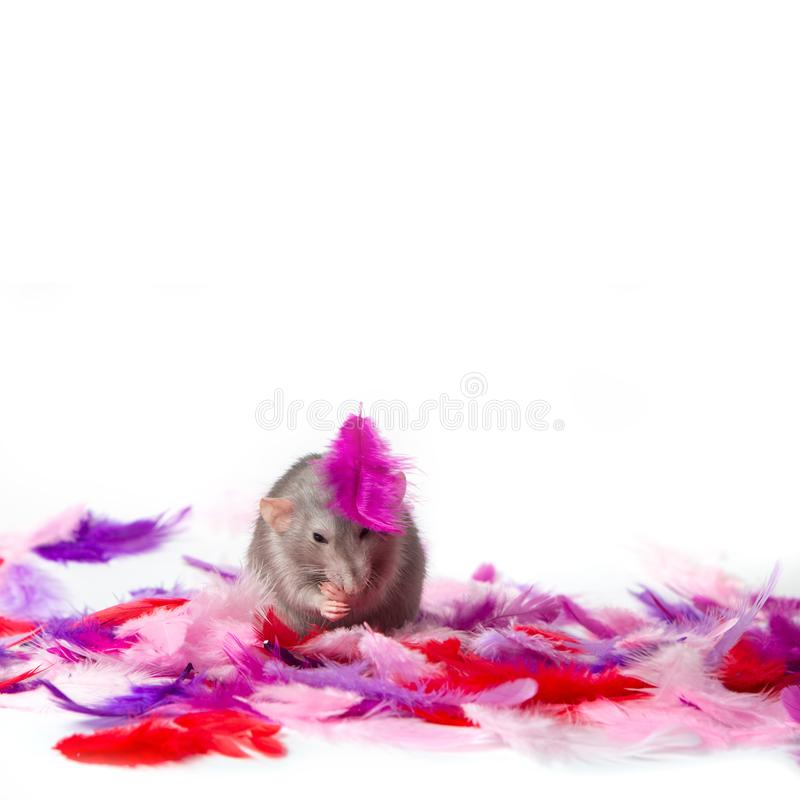 Decorative rat dumbo in multi-colored feathers on a white isolated background. The symbol of the new year stock photography