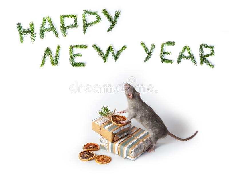 A decorative rat dumbo stands on its hind legs next to gifts on a white isolated background. Year of the rat. Charming pet royalty free stock image
