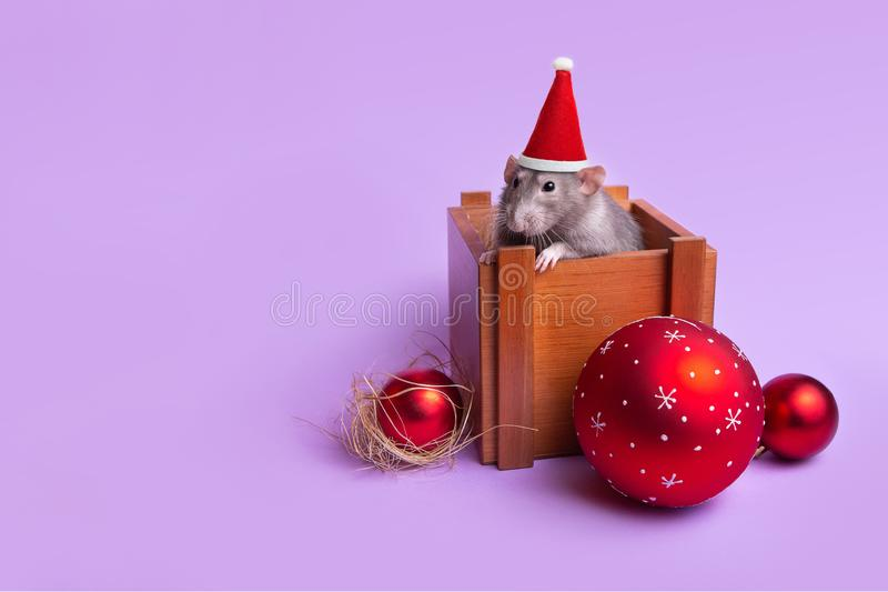 Charming pet. Decorative rat dumbo in a wooden box on a lilac background. New Year`s toys. Year of the rat. Chinese New Year. Decorative rat dumbo in a wooden royalty free stock photos