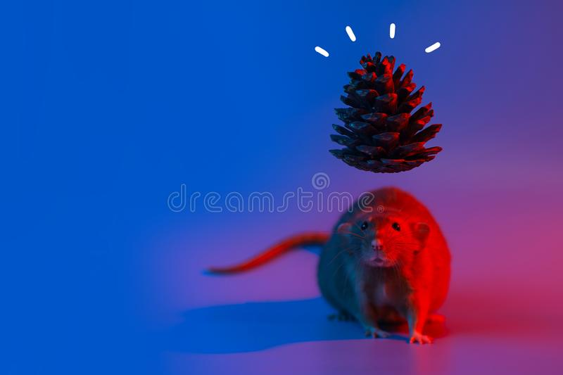 Decorative rat symbol of the year and the cone of the Christmas tree in blue neon light. Decorative rat symbol of the year and the cone of the Christmas tree in royalty free stock photography