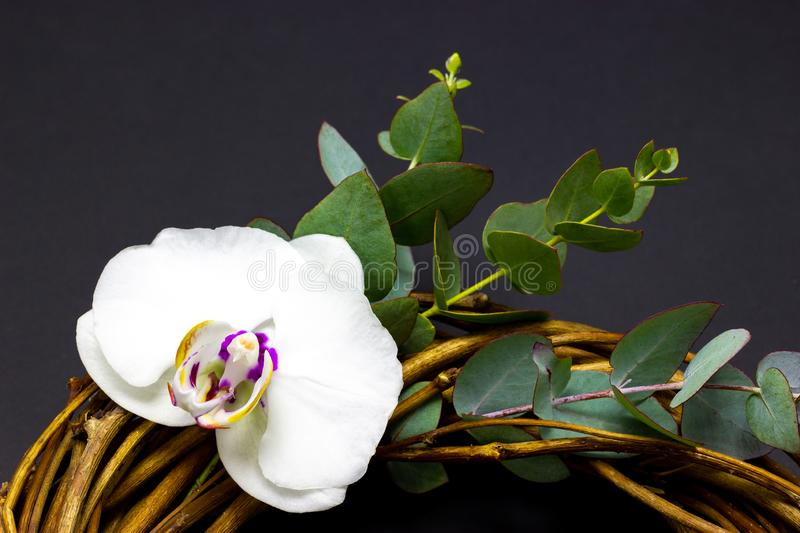 Decorative round wreath with orchid flowers and eucalyptus on a dark background royalty free stock photo