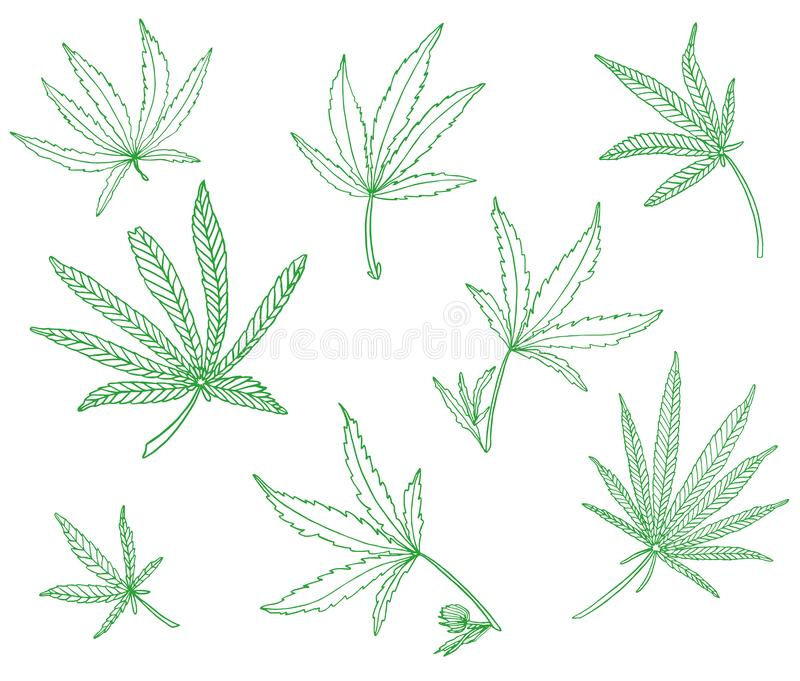 Decorative set of green branch of big hemp and leaves. On white background vector illustration