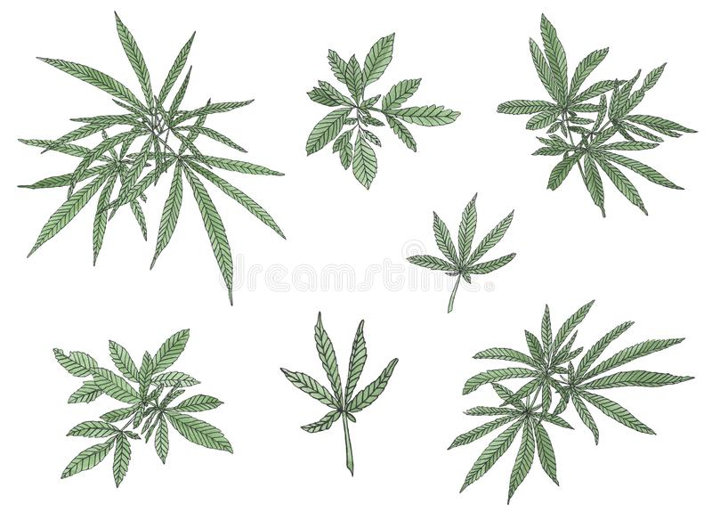 Decorative set of green branch of big hemp and leaves. On white background royalty free illustration