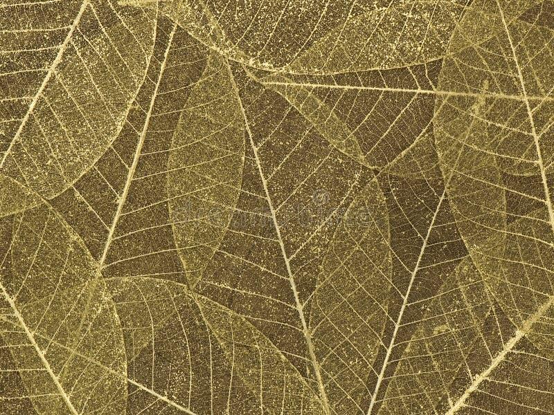 Download Decorative Skeleton Leaf Background Stock Image - Image: 9395189