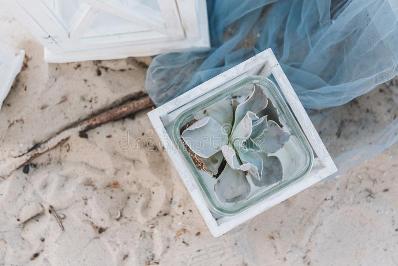 Decorative succulent plant in a pot on a beach royalty free stock photos