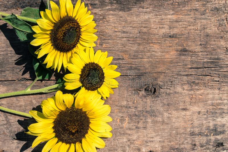 Download Decorative Sunflowers On The Wooden Background Stock Image