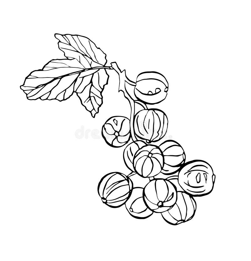Decorative vector branch of currant berries with leave. Decorative vector illustration branch of currant berries with leave on white background royalty free illustration
