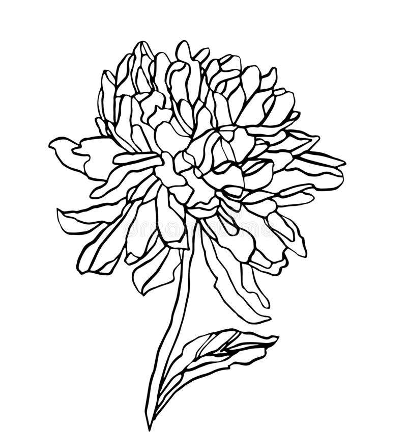 Decorative vector ink of drawing chrysanthemum flower royalty free stock photo