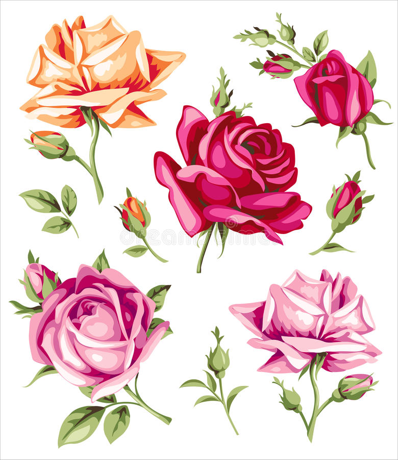 decorative vintage roses vector set of flowers and buds