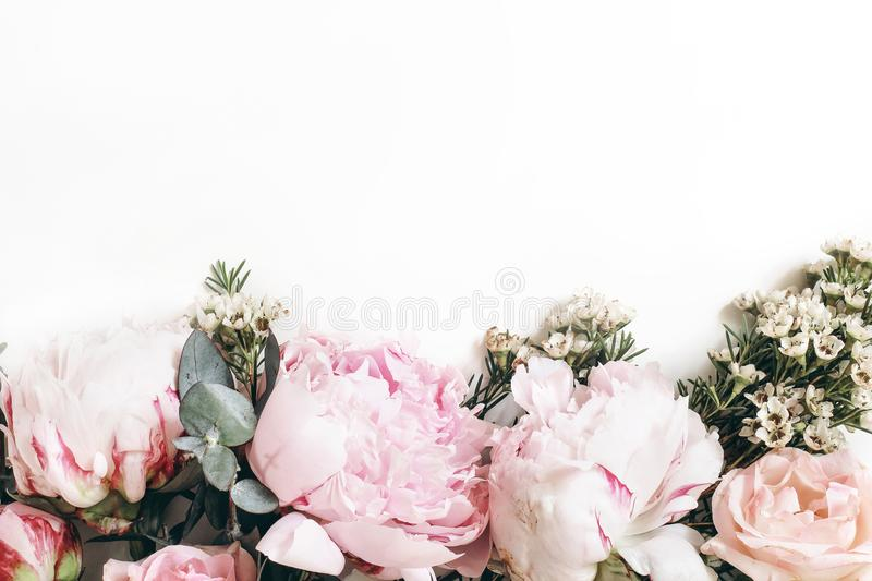 Decorative web banner made of beautiful pink peonies, rosies and eucalyptus isolated on white background. Feminine stock photography