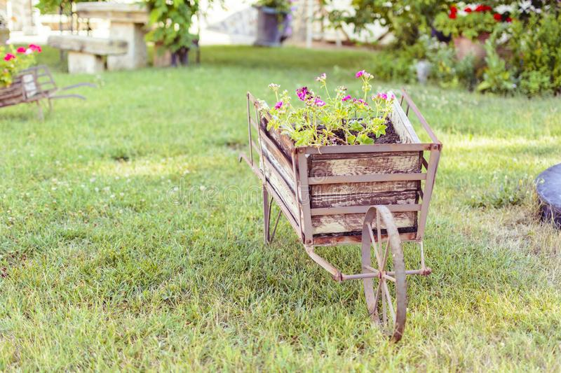 Decorative wheelbarrow in a garden with flower inside. royalty free stock photography