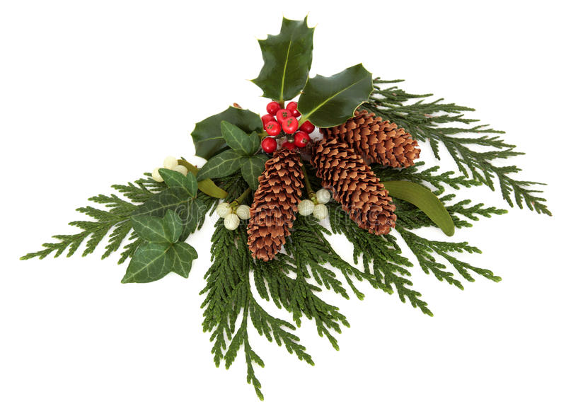 Download Decorative Winter Spray stock image. Image of greenery - 27002549