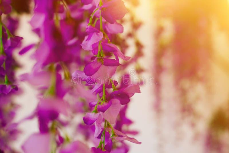 Decorazione artificiale di glicine floreali per l'interno, i ristoranti, le nozze ed i partiti fotografia stock