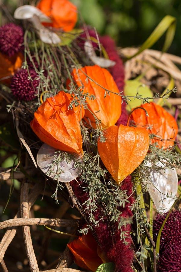 Decorazione autunnale con il alkekengi del Physalis della pianta di lanterna cinese fotografia stock