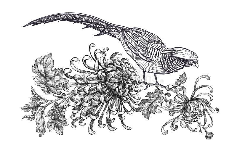 Decorazione con l'uccello ed i fiori Fagiano realistico e crisantemo del disegno della mano isolati su fondo bianco Vettore royalty illustrazione gratis