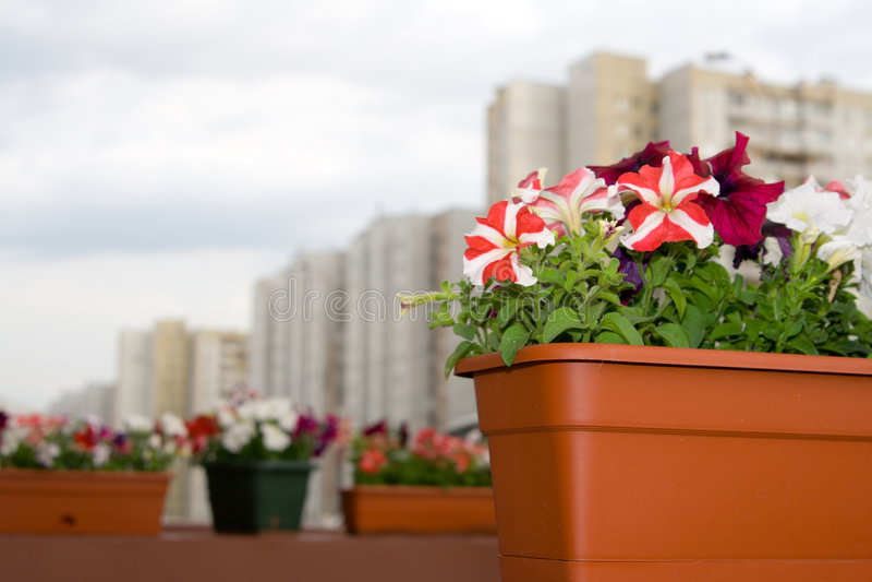 Decorazione della via con i fiori fotografia stock libera da diritti