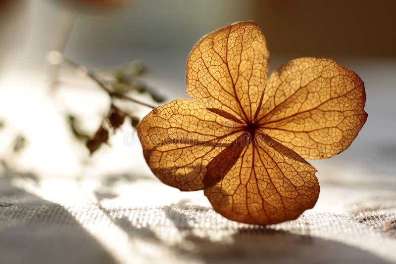 Decorazione di autunno fotografia stock libera da diritti