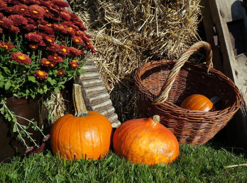 Decorazione di autunno con le zucche, il crisantemo del canestro di vimini e la paglia immagine stock libera da diritti
