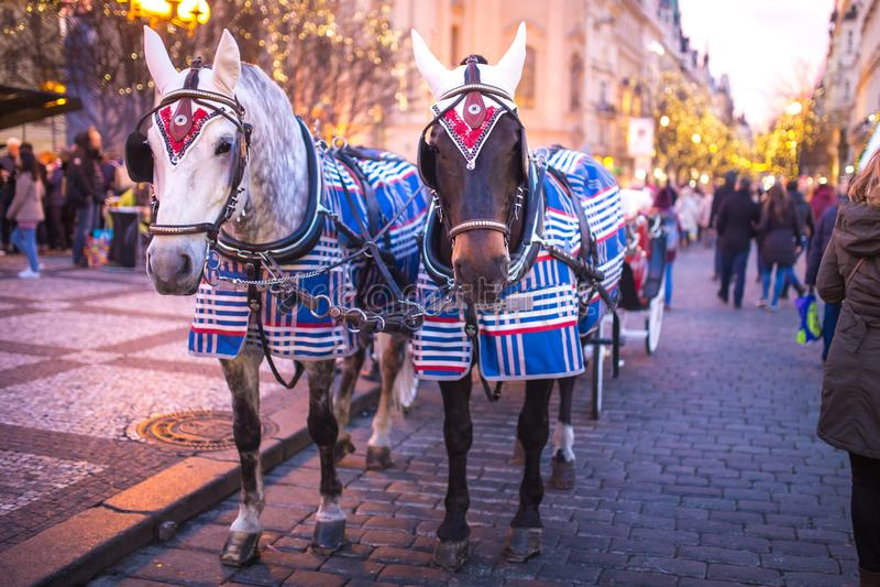 Decorazione di Natale sui paraocchi del cavallo nel centro di Praga nella sera immagine stock
