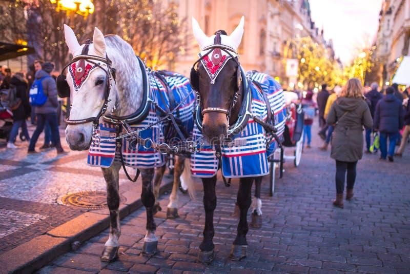 Decorazione di Natale sui paraocchi del cavallo nel centro di Praga nella sera fotografie stock