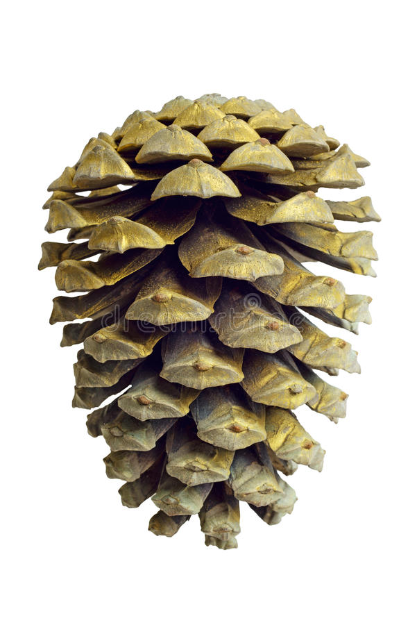 Decorazione dorata del cono del pino di natale su bianco immagini stock