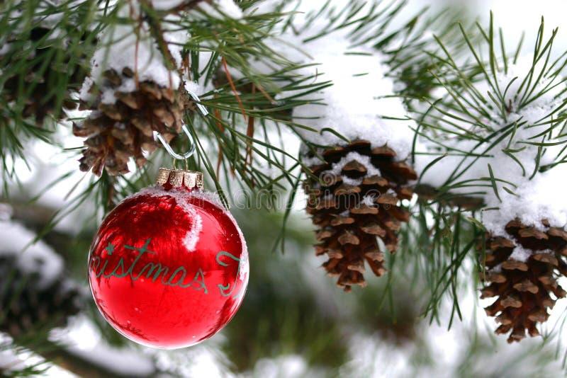 Decorazione rossa di natale sull'albero di pino innevato all'aperto fotografia stock