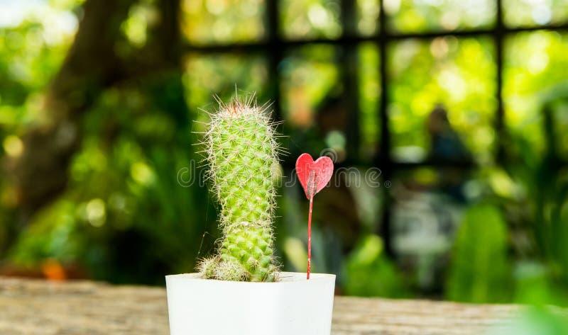 Decorazione sveglia in caffè locale, in piccolo cactus con poco vaso da fiori bianco e nel bello fondo di luce solare immagine stock libera da diritti