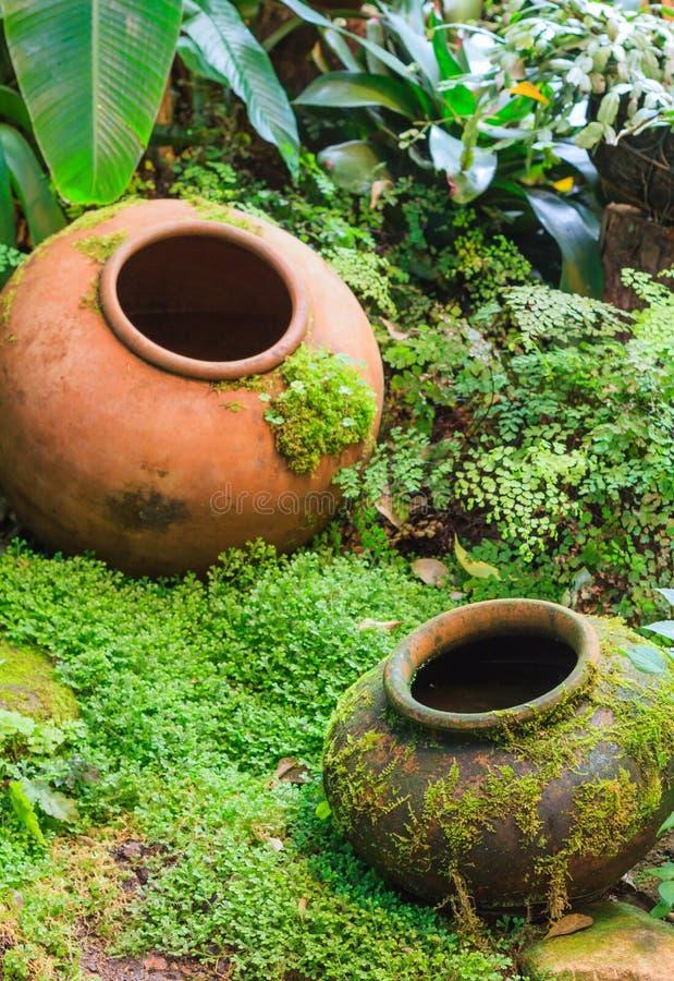 Decorazione tropicale del giardino del barattolo di terra fotografia stock libera da diritti