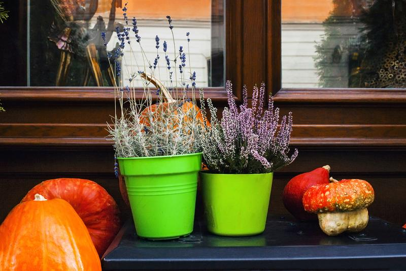 Decorazione vicino alla casa con le zucche, l'erica conservata in vaso e la lavanda immagini stock