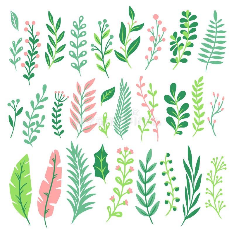 Decorbladeren Het groene installatieblad, het varensgroen en de bloemen natuurlijke varenbladeren isoleerden vectorreeks vector illustratie