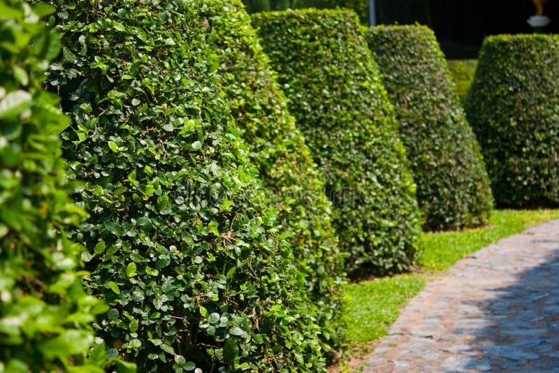 Decori gli alberi del giardino fotografia stock immagine di asiatico mano 13624404 - Prezzi alberi da giardino ...