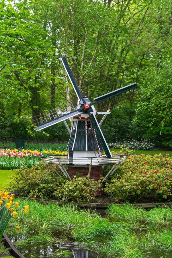 Decorotive miniature Dutch windmill in tulip garden park.  stock photos