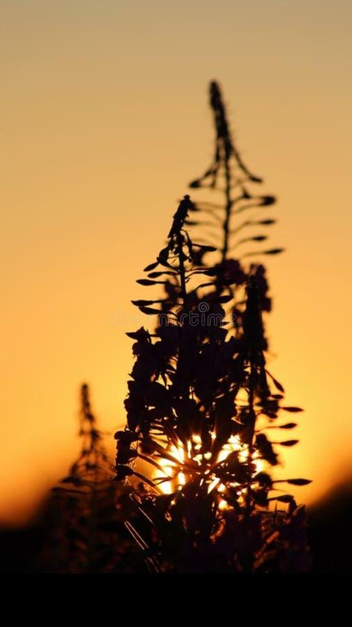 Dedalera en la puesta del sol foto de archivo libre de regalías