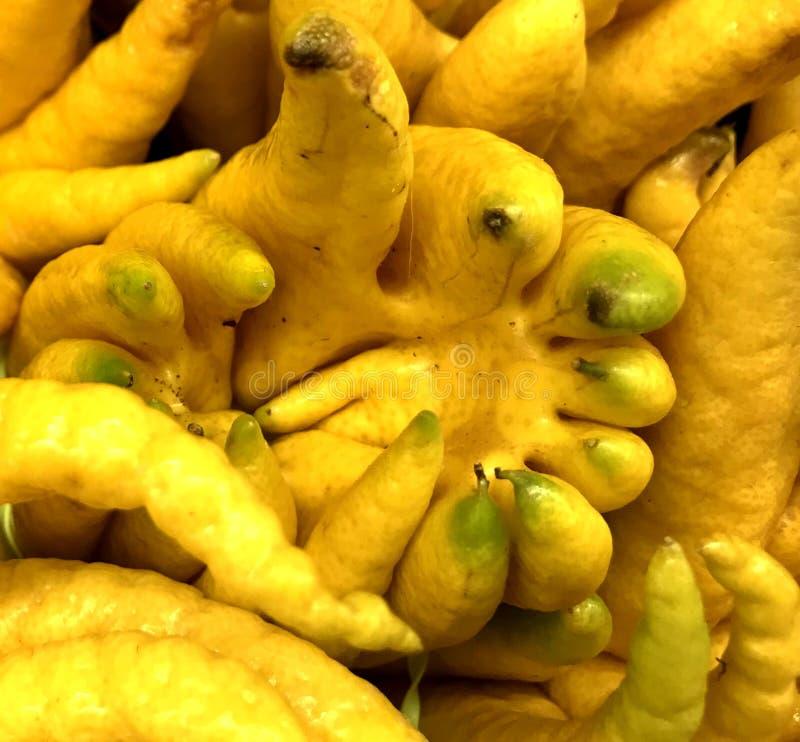 Dedos da mão ou do diabrete da Buda, fruto do Extremo Oriente fotografia de stock