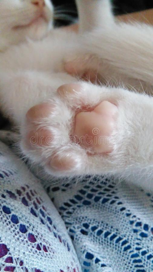 Dedos del pie del gatito imagenes de archivo