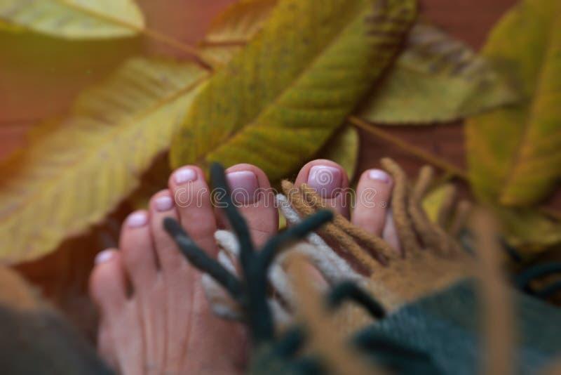 Dedos del pie en las hojas de la caída Mañana soleada del otoño, los dedos del pie, envueltos foto de archivo libre de regalías